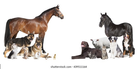 various pets and farm animals as a collage on a white background