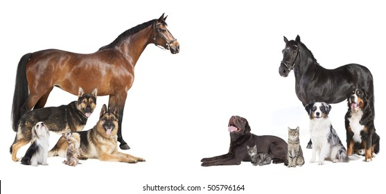 various pets and horses as a collage on a white background