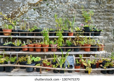 Various plants and herbs for sale in late summer using traditional medieval materiels for shelving.