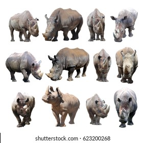 The various postures of the black rhinoceros and white rhinoceros on white background.White rhinoceros and black rhinoceros are two types of rhinos in Africa,nearly extinct.