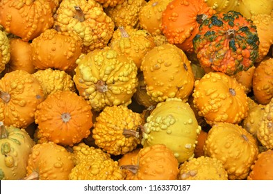 Various pumpkins background