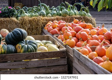 various pumpkins in large wooden boxes for sale at a farmers market, autumn food and decoration for halloween and thanksgiving, selected focus, narrow depth of field
