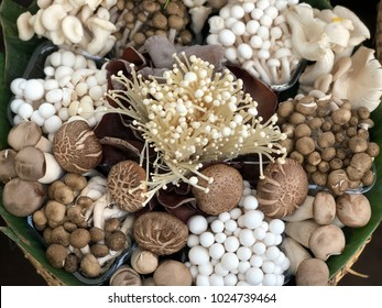 Various raw mushroom types - Portobello mushrooms, champignons, Shimeji mushrooms. Mushrooms background