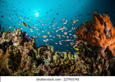 Various reef fishes swimming above the coral reefs in Gili, Lombok, Nusa Tenggara Barat, Indonesia underwater photo. There are Anthias, Wrasse and sponge.