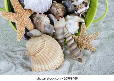 various seashells in green bucket on sand