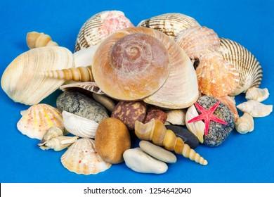 Various seashells,stones and starfish on blue