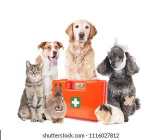 various sick pets and a first aid box against a white background