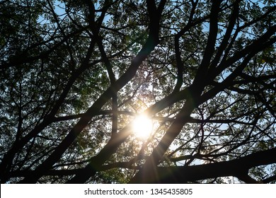 various silhouette size of branches cover daylight from the sun in the sky and made beneath area shady, silvan and relax for people who see young leaves and nature of plant and wood in summer season