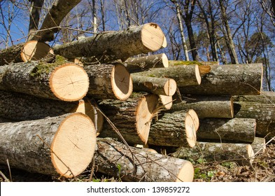 various size cut tree trunks logs body firewood stack in forest on background of blue sky. deforestation area in spring.