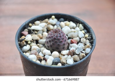 Various of small cactus