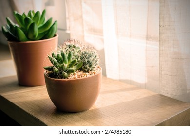 various of small plant and cactus in a pot, Vintage style
