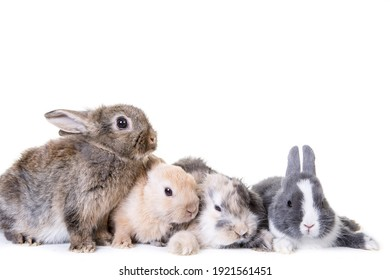 Various small,cute bunny children photographed in front of isolated studio white background.