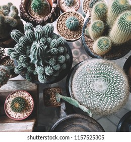 Various species of cactus in the pot used for home decoration