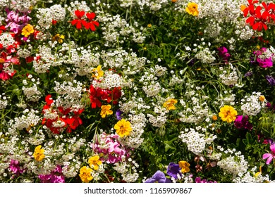 Various species of flowers and alpine flora, botanical garden of Savoy Castle, Gressoney-Saint-Jean, Aosta, Valle d'Aosta, Italy