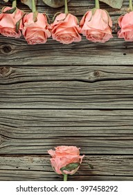 Various stemmed pink roses over weathered wooden rustic Valentines Day background with copy space