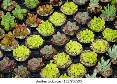 Various succulent plants
