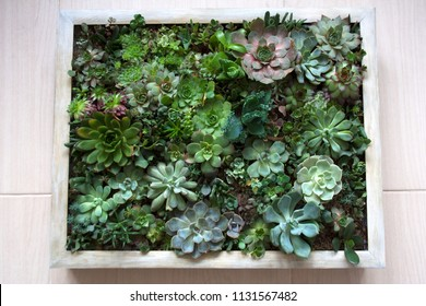 Various succulent plants arranged in living picture composition with wooden beige frame