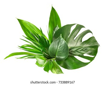 various tropical leaves isolated on white background