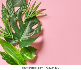 various tropical leaves on a pink background, top view