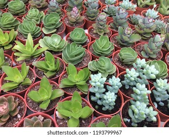 Various type of Mini cactus