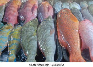Various types of fresh coral reef fish on display at  local open eateries serving seafood dishes in Kota Kinabalu, Sabah, Malaysia. Seafood is one of the main atrratction for visitors of Sabah.