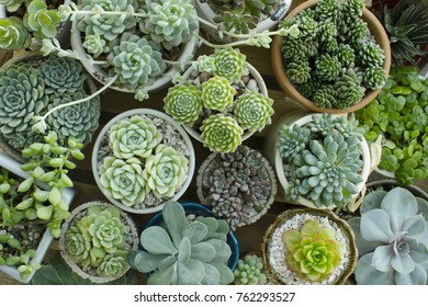 Various Types of Houseplant Flowering Succulent plant pots background top view