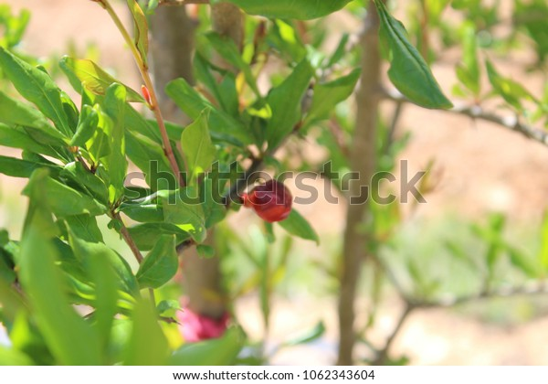 Various types of plants