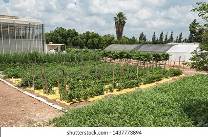 various vegetables undergoing drip irrigation and plastic mulch testing on kibbutz magal in central israel with shadehouses in the background