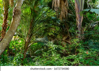 The various vegetation, flowers and trees in the tropical forest in Yanoda Park,  Sanya city. Hainan island, China.