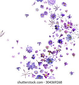 various, violet flower buds breeze, with hyacinths flying to the borders, repeatable and isolated on absolute white