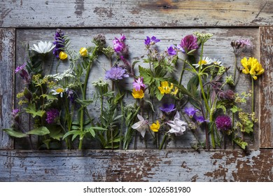Various wild flowers on old wooden background, like living herbarium. Picked in Norway, photographed in daylight