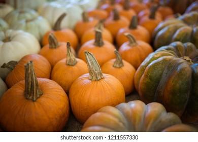 Variousl small pumpkins and gourds
