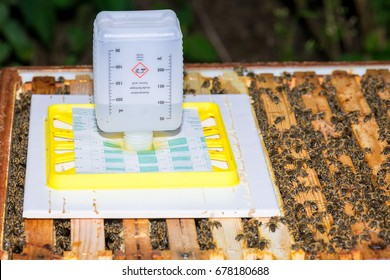Varroa mites treatment with formic acid on the bee hive from honey bee (Apis mellifera)