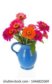 Vase colorful zinnias isolated over white background