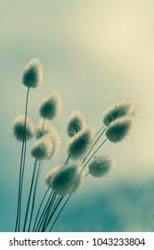 Vase of dried soft autumn flowers. Rabbit Tail Grass. vintage foto