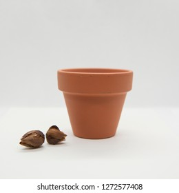 vase, earth and bulbs and white background