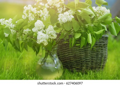 vase with flowers of white lilac