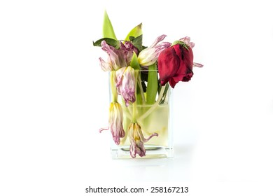 A vase full of withered and dead flowers (tulips). Isolated on white.