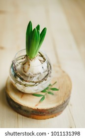 vase with hyacinth on a wooden cut