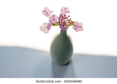 A vase of hydrangeas in front of white background