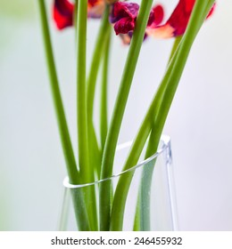 Vase with sere flowers