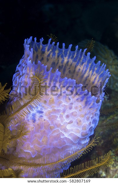 A vase sponge with a golden Crinoids