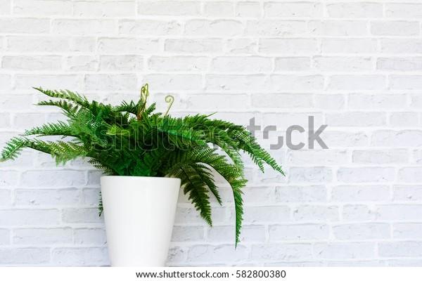 Vase tree