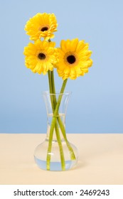 Vase of yellow daisies on table with tan cloth and blue background