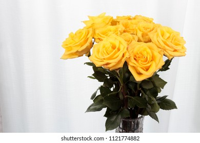 Vase of yellow rose flowers in front of a curtain. Twelve yellow roses with pink streaks vase bouquet. One dozen bright yellow roses with tiny pink streaks in a crystal vase near a sheer white curtain