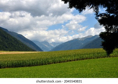Vast cornfields at the beginning of the Antholz valley