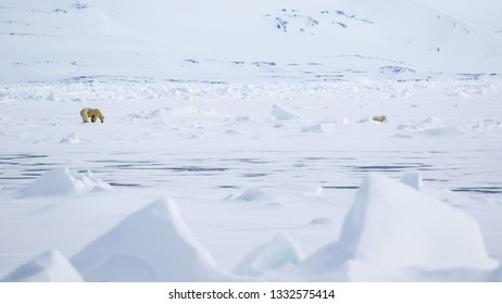 In a vast frozen Svalbard landscape a Polar Bear mother stands patiently at a seal hole hoping to feed her cubs who wait nearby.