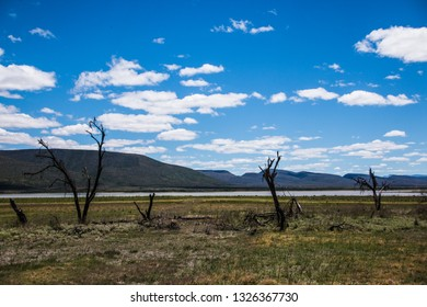 Vast Open Desolate Grassland Landscape with dead black trees, green grass, lake and mountain with rich blue sky and white clouds in the valley of desolation in Graaf-Reinet, South Africa.