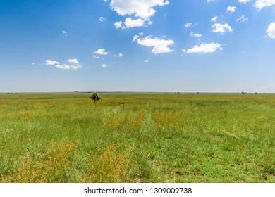 Vast and open Serengeti Grassland