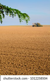 Vast plowed area with a group of trees in the background and a leafy branch in the foreground; Agriculture; Cultivation of land